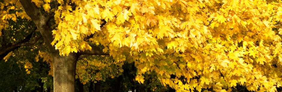cropped-yellow_autumn_cover_6.jpg